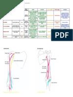 Neck medicine for and pdf anatomy head dental