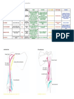 Muscles of the Upper Limb Made Easy
