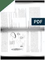 Cultivo de Microalgas Marinhas - Divisão Chlorophyta
