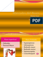 tutoradeanatomamsculoscoracobraquialybiceps-130206002909-phpapp01