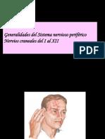 Nervios Craneales I-XII