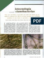 Micro Cianobacterias