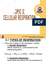 5. Cellular Respiration