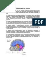 Generalidades Del Cerebro