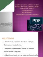 Observacion de Estructuras de Hongos. (1)
