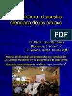 Phytophthora, el asesino silencioso de los cítricos - Ramiro González Garza