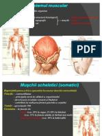 Sistemul Muscular