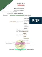 fiziologie cerebel hipotalamus