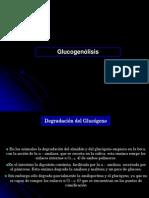clase14glucogenolisisyglucogenogenesis-090716211003-phpapp02