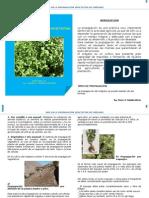 BPA en la propagación vegetativa de orégano