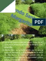 Fundo Santa Margarita