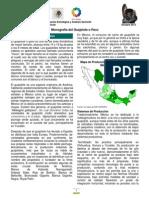 MonografíaGuajolote(oct12)