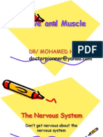 Dental Nerve and Muscle-2