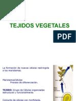 1.2_Tejidos_Vegetales