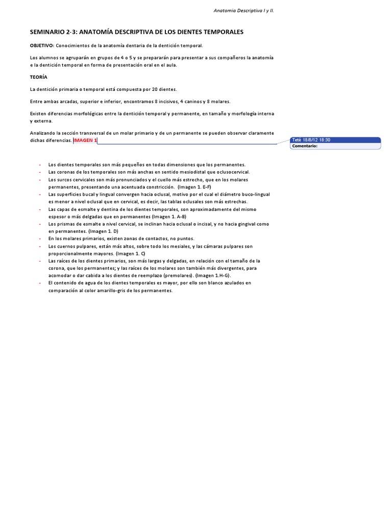 Seminario 2 y 3. Anatomía Descriptiva I y II