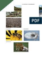 El Ecosistema y La Contaminacion