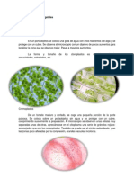Células y organelos vegetales, hongos