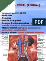 Aula Supra Renal Adrenal 04-05-11