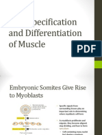 Specification and Differentiation of Muscle