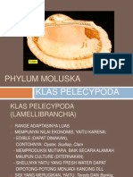 Phylum Moluska Pelecypoda