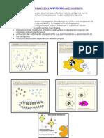 Tipos de reacción antígeno-Ac