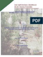 Estudio de crecimiento para Pinus oocarpa y P. lawsonii en la zona de transición del municipio de Tancítaro. Estado de Michoacán, México