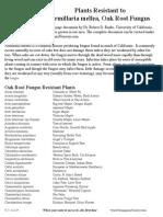 Oak_Root_Fungus_(Armillaria Mellea) Resistant - Dr Robert D Raabe