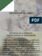 Ontogenia Del Gato