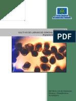 Protocolo de Cultivo de Larvas