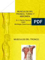 Musculos Del Tronco, Torax y Abdomen