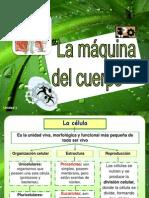 Ppt1 La Maqudelcuerpo.hc