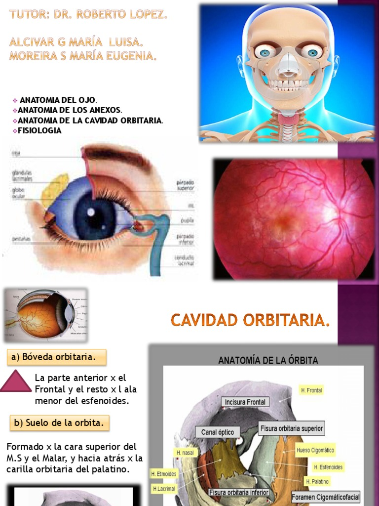 Oftalmologia Ojo ANATOMIA OCULAR