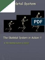 Skeletal System in Detail