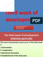 7th Lecture the Third Week of Development
