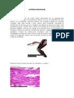 Comparaacion de Musculo Animal y Humano