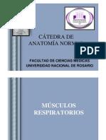 MÚSCULOS RESPIRATORIOS-2