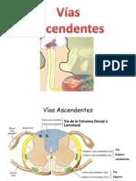Sindrome Sensitivo Medular