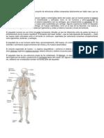El sistema óseo y el esqueleto