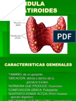 GLÁNDULA PARATIROIDES y suprarrenales