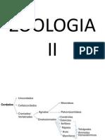Zoologia II- Fisiologia