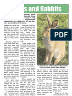 Hares and rabbits factsheet