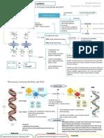 Mapa Conceptual1 Acidos Nucleicos