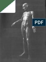 La representación del cuerpo humano - Modelos anatómicos en cera - Michel Lemire