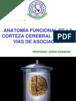 Anatomía funcional de la corteza cerebral y de las vías de asociación
