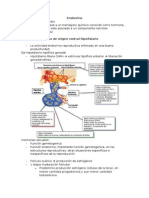 04 - Sistema Endocrino.doc
