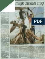Floods Damage Cassava Crop