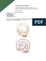 68279616 Tabla Cientifica de La Nueva Medicina Germanica Del Dr Ryke Geerd Hamer