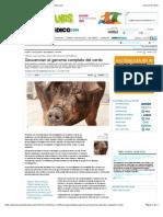 Genoma Cerdo Secuenciado