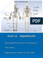 Skeletal Bio Mechanics Slide Show