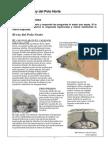 Mostra Ós polar Aval diagnost castellà CAT 4T